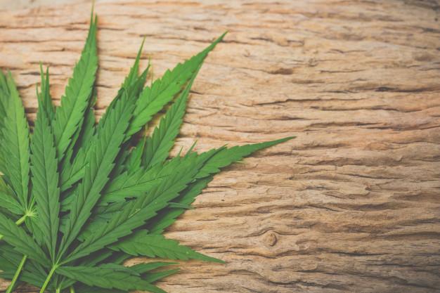 Le cannabis: Quel effet et comment le consommer?
