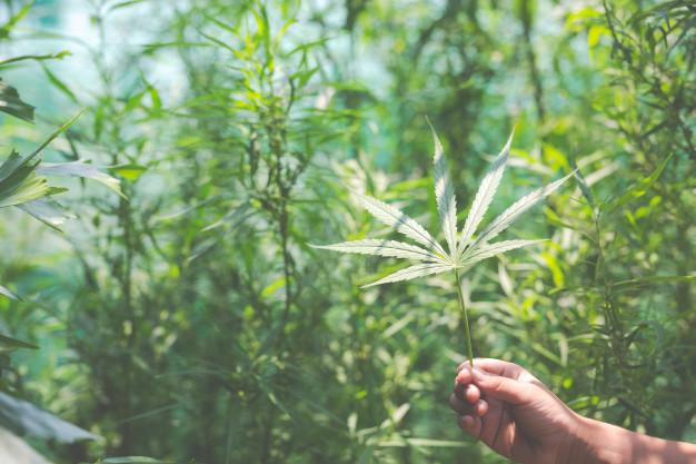Se détendre avec du cannabis