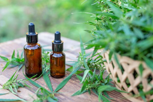 Le cannabis : ses bienfaits et ses effets néfastes